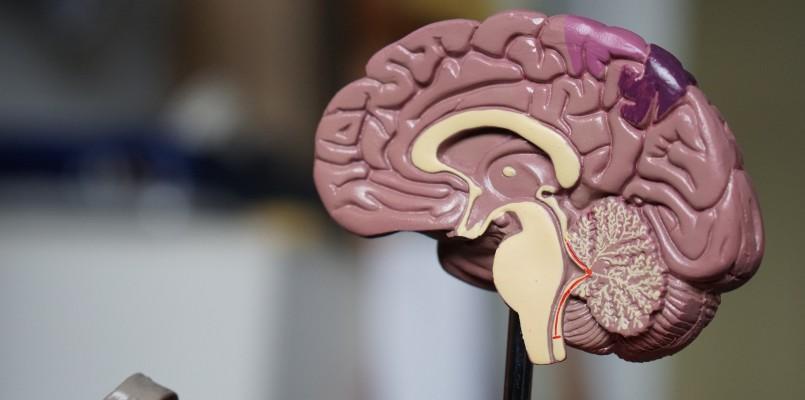 an-interview-with-an-interesting-neuropsychologist