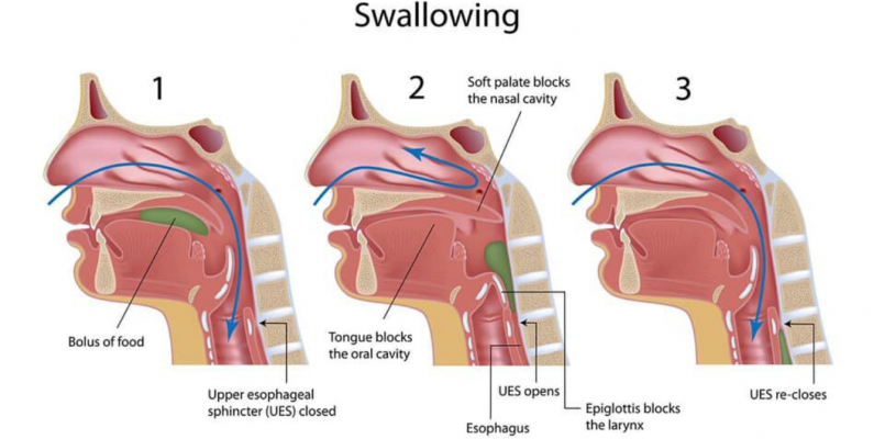 swallowing medical diagram